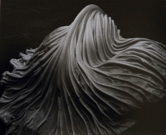 Cabbage-Leaf-edward-weston